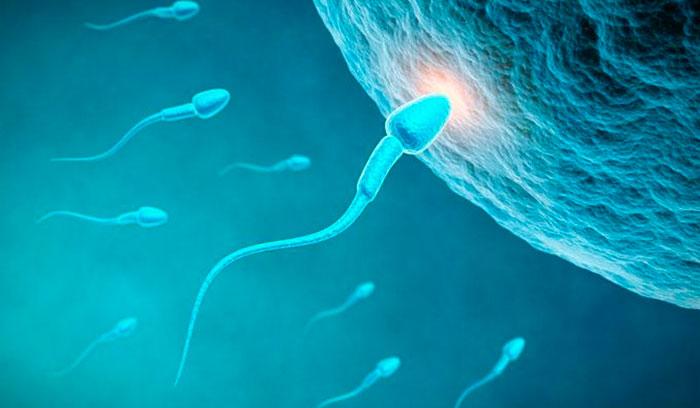 Влияние кофе на сперму